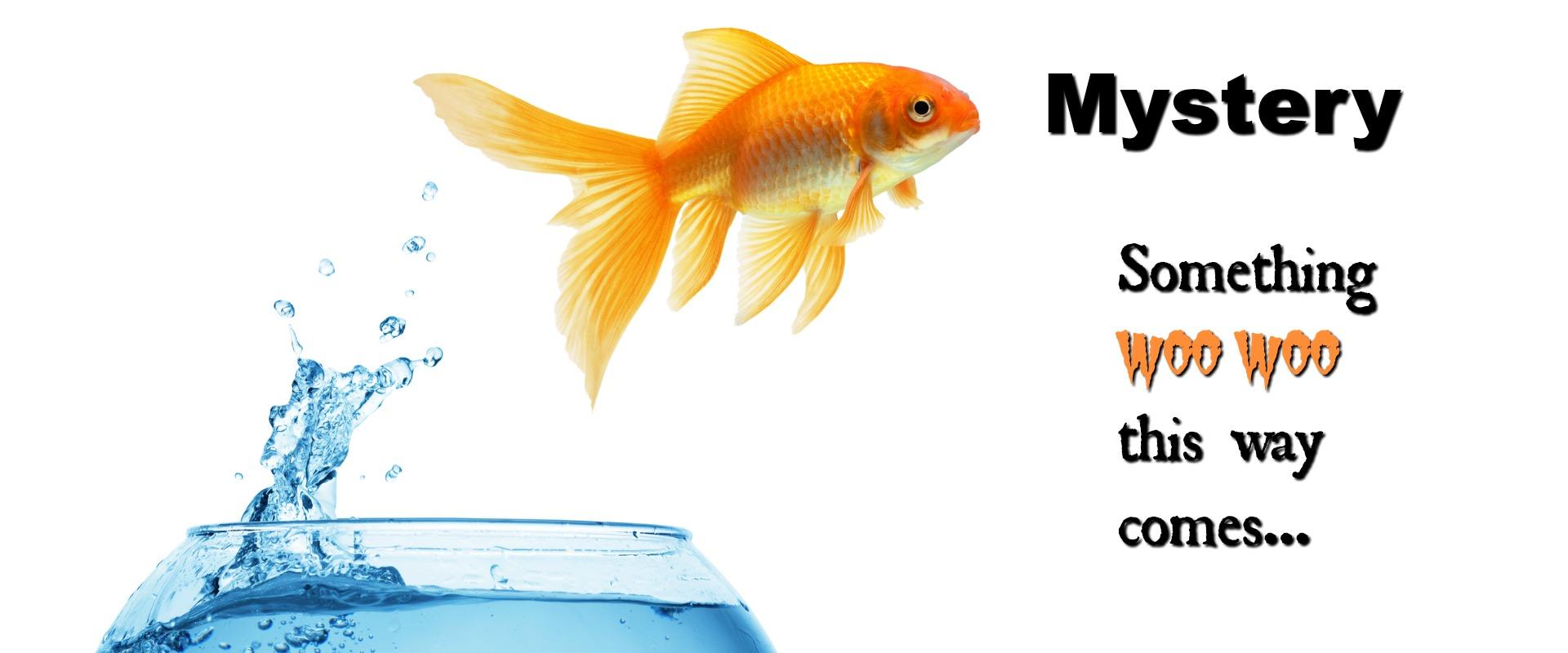 goldfishheader3